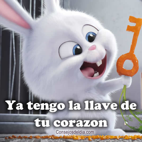 llave frases